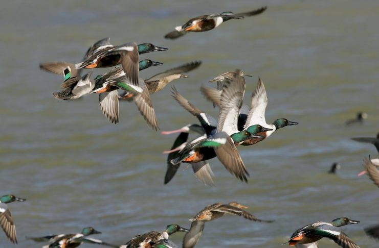 NATIONAL WEATHER RADAR DETECTS FLOCK OF DUCKS