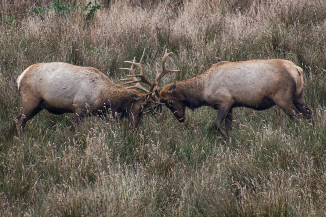 HUNTERS ILLEGALLY KILL 50 ELK IN MONTANA