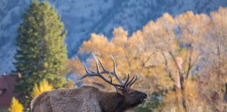 MORE ELK TAGS AVAILABLE IN IDAHO'S WOOD RIVER VALLEY DUE TO SB1151