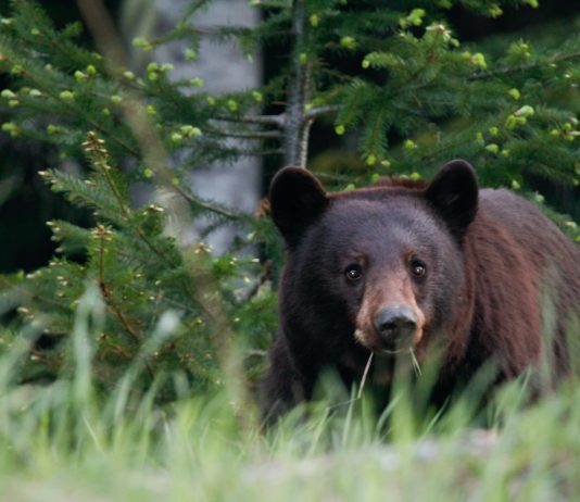 NEW JERSEY GOVERNOR MOVES FORWARD ON BEAR BAN 2021