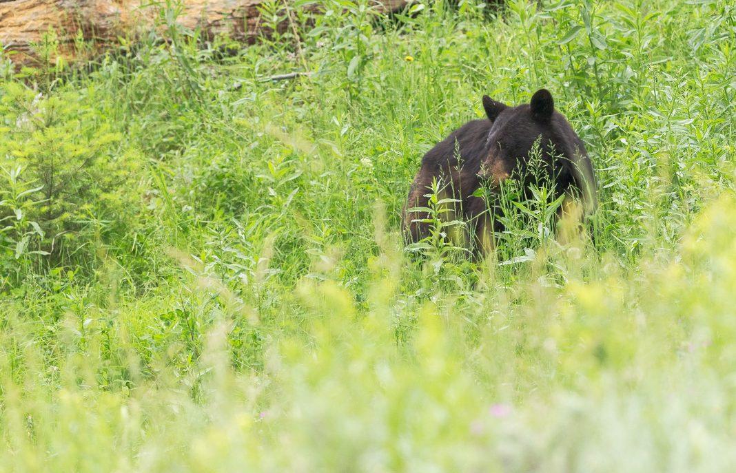 PROPOSED BEAR PERMIT CHANGES IN UTAH