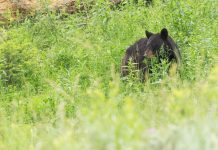 PROPOSED BEAR PERMIT CHANGES IN UTAH