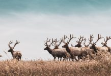 2020 COLORADO HUNTING CHANGES