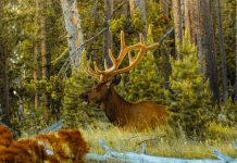 WYOMING BIG GAME APPLICATION DEADLINE APPROACHES