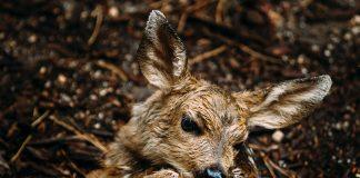 UTAH DWR WARNS NOT TO TAKE HOME WILD ANIMALS