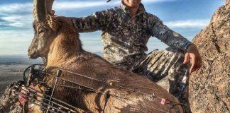 New Mexico Ibex