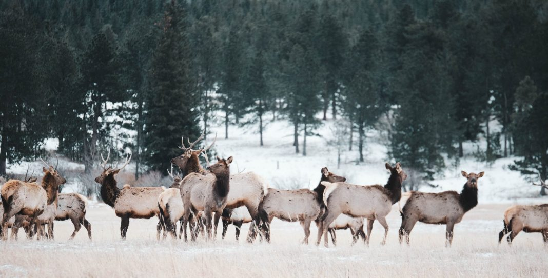 NEW FENCES ASSIST IN WYOMING WILDLIFE MIGRATION