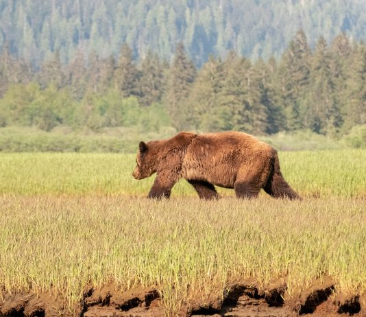 US APPEALS COURT AGREES WITH GRIZZLY PROTECTION