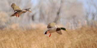 antlerless and waterfowl hunt reminders