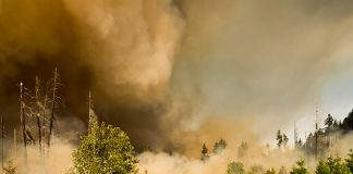 COLORADO HUNTS IMPACTED BY WILDFIRES