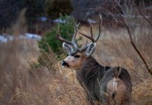 WYOMING RESIDENTS ASSIST WITH CREATING NEW CWD PREVENTION STRATEGIES