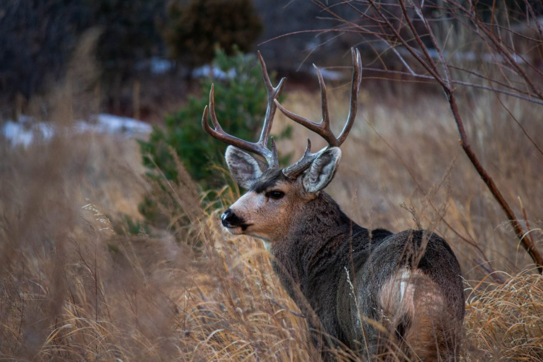ENERGY PRODUCTION AND MULE DEER
