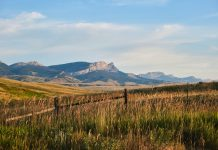AUCTION RAISES MORE THAN $260,000 FOR MONTANA WILDLIFE