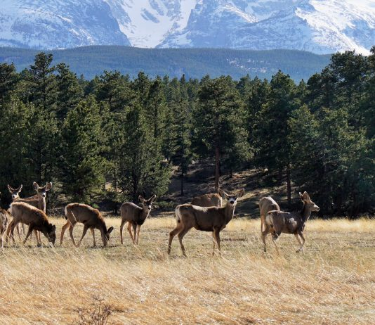 BISHOP PAIUTE TRIBE AND CDFW EXTEND HUNTING SEASON