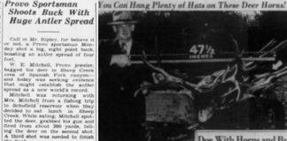 MONSTER UTAH MULE DEER TAKEN IN 1941