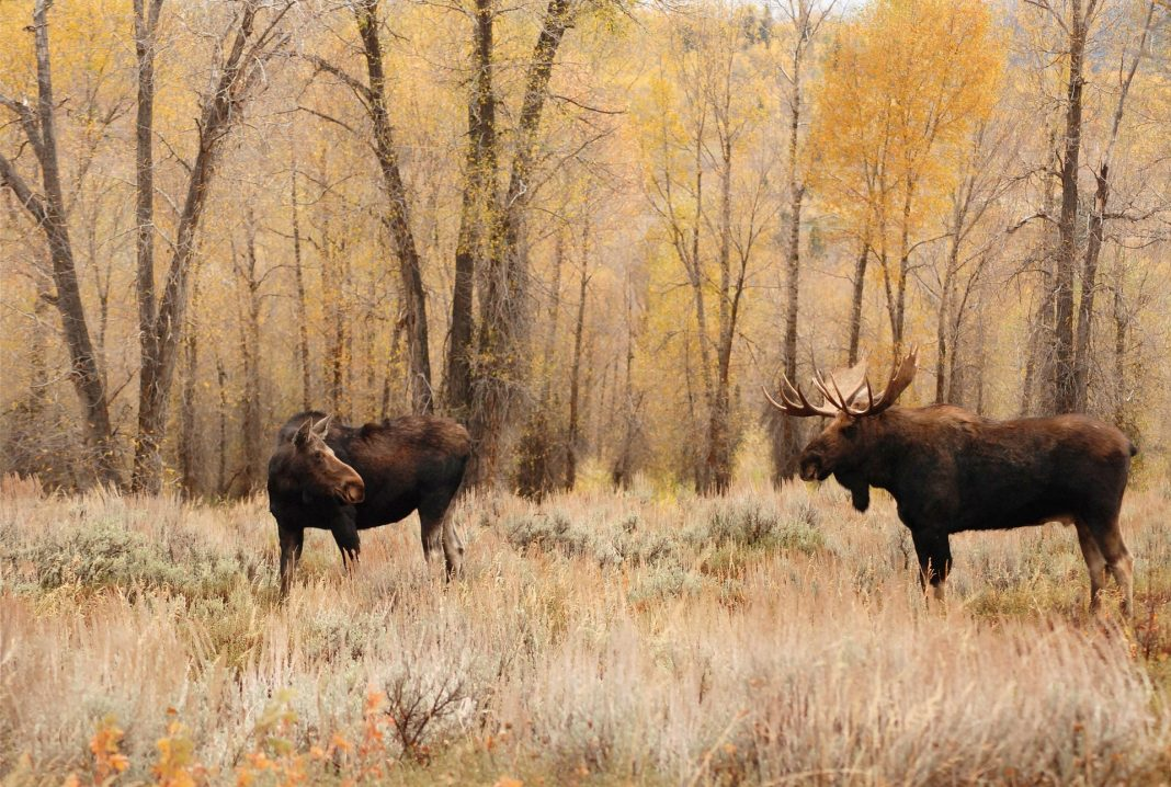 felon gets hunting license