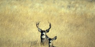 CHANGES TO WYOMING DEER SEASON