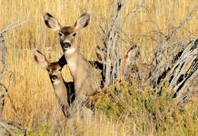 IDAHO FAWN SURVIVAL BELOW AVERAGE