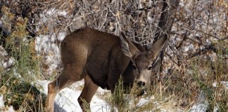 IDAHO LIMITS NONRESIDENT HUNTING OPPORTUNITIES