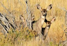 2019 NORTH DAKOTA DEER HUNTING SUCCESS RATE