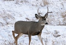 CHRONIC WASTING DISEASE PLAN APPROVED IN WYOMING