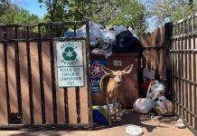 DEER DIES FROM GARBAGE IN ZION NATIONAL PARK