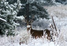 SOUTH DAKOTA POACHING CASE