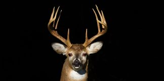 DRAWN HUNT APPLICATIONS OPEN IN TEXAS