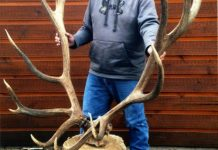 World Record American Elk