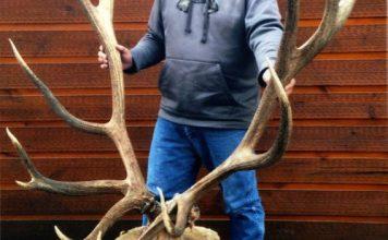 World Record American Elk