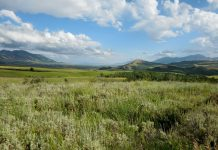 SAGEBRUSH CONSERVATION