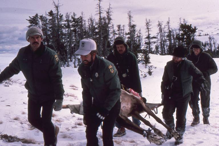 MOUNTAIN CARIBOU NOW EXTINCT IN LOWER 48