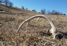 WYOMING SHED HUNTING CLOSURES