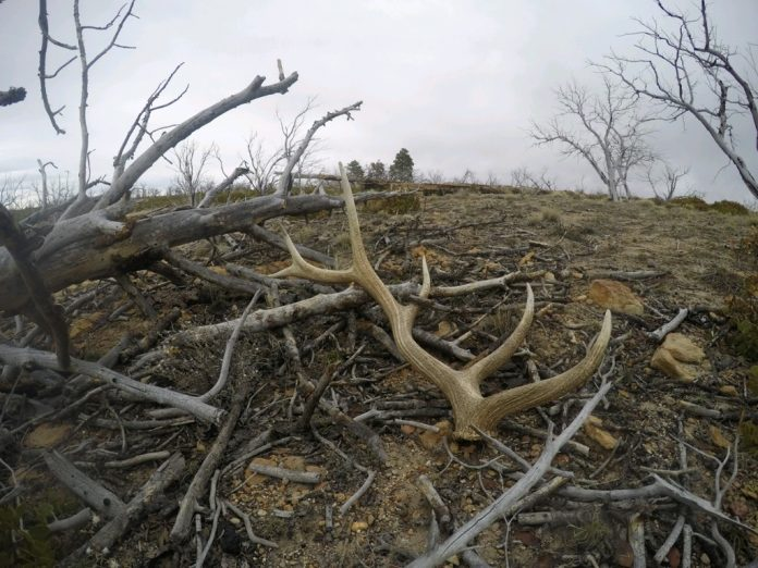 THE DEAL WITH SHED HUNTING