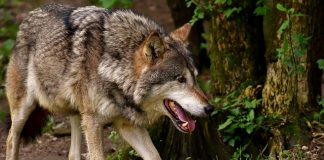 violated Endangered Species Act