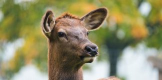 WILDLIFE CONFLICT EXPECTED TO RISE IN COLORADO