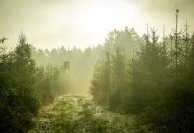 OPTIMIZING TREESTAND ACCESS