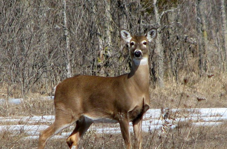 HUNTER CONTRACTS TUBERCULOSIS FROM DEER