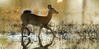SOUTH DAKOTA CHRONIC WASTING DISEASE