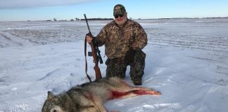 WOLF SHOT IN SOUTH DAKOTA