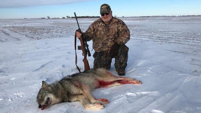 WOLF SHOT IN SOUTH DAKOTA