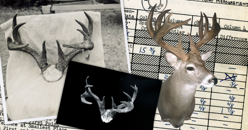 WORLD RECORD TYPICAL COUSE DEER